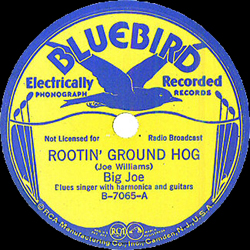 Rootin' Ground Hog